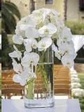 Rental store for Cylinder Glass Vase - Centerpiece 12 in Grand Cayman KY