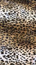 Rental store for Pillow Cushion Cover- Leopard print W in Grand Cayman KY